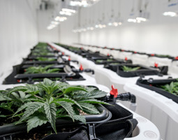 Cannasouth cultivation facility